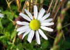 """Lua """"kwiatuszek:)"""" (2006-08-31 12:08:09) komentarzy: 10, ostatni: lubie stokrotki, szkoda ze tak centralnie, moznabyło z niej wydobyc wiecej"""