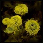 """beige """"... przyjaźń ..."""" (2006-08-31 18:25:37) komentarzy: 81, ostatni: i energia!:)"""