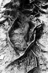 """albert broszka """""""" (2006-09-01 07:09:59) komentarzy: 4, ostatni: stopy starego człowieka..."""