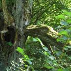 """dyzio1 """"...o czym mówią drzewa?"""" (2006-09-01 10:50:00) komentarzy: 3, ostatni: troszku bałaganiarski kadr ;) ... krzaczory na pierwszym planie zupełnie niepotrzebne ... Troszku przepaleń; ociepliłbym też te zielenie ..."""