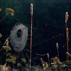 """Ravkosz """"letnie ostatki #1"""" (2006-09-01 22:01:17) komentarzy: 57, ostatni: super"""