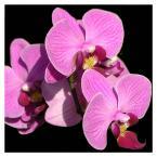 """mariol """"storczyk"""" (2006-09-09 15:37:31) komentarzy: 6, ostatni: bardzo ł;adne eleganckie foto w mocnych kolorach a kadr mi się podoba.. pozdrawiam"""