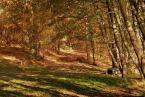 """Adaśko I """"..jesień idzie rady na to nie ma.."""" (2006-09-10 21:37:48) komentarzy: 51, ostatni: Ładnie to wyszło:)"""