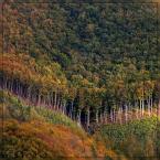 """Ravkosz """"Frontem ku jesieni - piersią ku słońcu ..."""" (2007-11-02 19:38:15) komentarzy: 42, ostatni: a to fajne"""