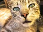 """leonek """"oczka"""" (2007-11-05 20:45:07) komentarzy: 12, ostatni: :D superfajny kotek :)"""