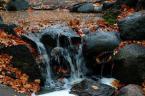 """ortlieb """"..jeszcze jesiennie..."""" (2007-11-05 22:31:19) komentarzy: 6, ostatni: fajne ujęcie"""
