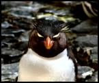 """Cigana """"pingwin"""" (2007-11-06 21:52:40) komentarzy: 9, ostatni: techno party... dobre.."""