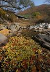 """Willie Sunday """"Pyeochungsa"""" (2007-11-10 16:03:25) komentarzy: 10, ostatni: Ładne kolory jesieni, podoba mi się z takim pierwszym planem."""