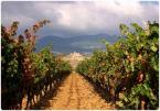 """Ilona Budzbon """"Rioja"""" (2007-11-12 15:23:41) komentarzy: 15, ostatni: Pozazdrościć Ilonko, pięknie tam miałaś.."""