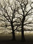 "-sever- ""drzewa"" (2007-11-18 18:51:36) komentarzy: 0, ostatni:"