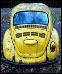 """Piowa """"Żółty jesienny liść"""" (2007-11-18 22:59:04) komentarzy: 11, ostatni: fajny model. i dobrze pstryknięty. Pozdro!"""