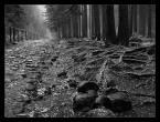 """Marcin Sośnicki """"Karkonoskie lasy - początek zimy... cz.2"""" (2007-11-19 10:22:48) komentarzy: 32, ostatni: Super foto :)"""