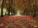 """Wołodytjowski """"Czerwony dywan z jesiennych liści utkany"""" (2007-11-25 20:56:45) komentarzy: 64, ostatni: Trzeba mówić że ładne? ;)"""