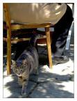 """fand """"...cat without hat..."""" (2007-11-27 16:27:29) komentarzy: 1, ostatni: A zdjęcie świetne - tylko tytuł """"z kapelusza""""!"""