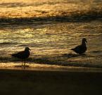 """asiasido """"wakacyjnie"""" (2007-11-28 10:50:49) komentarzy: 21, ostatni: Piękne światełko"""