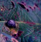 """Nagalfar """"..."""" (2007-11-28 17:58:29) komentarzy: 13, ostatni: ciesze się że fiolety podeszły :)"""