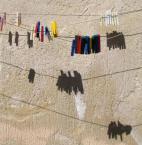 "rembrant ""Partytura"" (2007-12-02 00:43:31) komentarzy: 5, ostatni: tłuste nutki, oba utwory niebanalne"