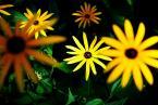 """SławeK WaW """"Kwiaty"""" (2007-12-06 21:19:20) komentarzy: 5, ostatni: Obiektyw Sigma 10-20 EX"""
