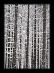 """Kielarki """"Dotyk zimy w leśnym wydaniu"""" (2007-12-07 12:26:15) komentarzy: 31, ostatni: Świetny pomysł i wykonanie..."""