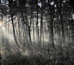 """Sordyl """"Puszcza Niepołomicka 8 rano."""" (2007-12-11 10:33:47) komentarzy: 14, ostatni: swietny klimat, gratuluje"""