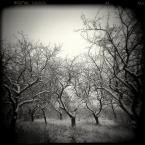 """LeszeK """""""" (2007-12-18 21:32:51) komentarzy: 33, ostatni: sniegowe,,"""