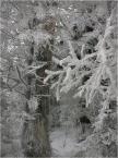 """koszmar69 """"Łysa Góra - 16.12.07."""" (2007-12-18 23:43:44) komentarzy: 1, ostatni: Piękna zima!!!"""