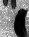 """hella """"królewna i kot"""" (2007-12-19 21:39:45) komentarzy: 4, ostatni: :)"""