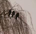 """emt emergency """"ich troje"""" (2007-12-24 12:07:03) komentarzy: 1, ostatni: Kolorki blade, nie widać dokładnie samych ptaków"""