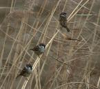 """Willie Sunday """"Trójka na wietrze.."""" (2007-12-28 05:14:30) komentarzy: 11, ostatni: pięnie wypatrone- mi kojarzą się z nutami na pieciolini ;)"""