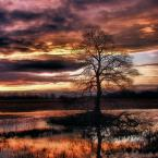"""Steven M. """"Miedziana kraina."""" (2008-01-08 20:08:23) komentarzy: 61, ostatni: Widać troszeczkę aberracje chromatyczne na pniu drzewa, ale ogólnie zdjęcie jest prześliczne:-)"""