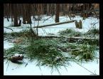"""marek2112 """"w krainie bobrów"""" (2008-01-14 19:04:53) komentarzy: 8, ostatni: również je zamieszczam jako ciekawostkę, dzisiaj wrzuciłem  kolejne; pozdr :)"""