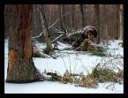 """marek2112 """"w krainie bobrów"""" (2008-01-16 17:38:48) komentarzy: 6, ostatni: dobre"""