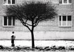"""Gains """"Drzewo"""" (2008-01-17 23:25:52) komentarzy: 2, ostatni: ;)"""