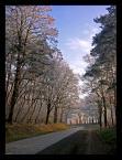 """Andrzej Klauza """"Droga na Wicinę."""" (2008-01-20 11:42:53) komentarzy: 7, ostatni: Bdb"""