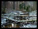 """marek2112 """"strumień Migówka"""" (2008-01-21 20:11:12) komentarzy: 13, ostatni: Mariusz, tak naprawdę to ten """"koniec świata"""" jest naprawdę niedaleko Ciebie; pozdr :)"""
