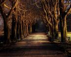"""Pe. """"Dear Darkness"""" (2008-01-22 21:52:00) komentarzy: 17, ostatni: świetne te drzewa tak niby jasno, a mroczno i tajemniczo..."""