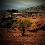 """ojosdebrujo """"pragnienie /naranjada/"""" (2008-01-24 10:42:27) komentarzy: 30, ostatni: znów zaglądam bo tu jakoś cieplej :)"""