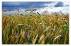 "sejlor ""Letnia impresja"" (2008-01-25 12:49:30) komentarzy: 46, ostatni: ach to lato...:)"