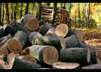 """Karczewski """"Las gospodarczy"""" (2008-01-27 12:42:38) komentarzy: 30, ostatni: Fajne"""