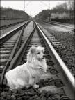 """cheeetah """"o psie, który jeździł koleją..."""" (2008-01-29 23:04:32) komentarzy: 15, ostatni: miałem  mniej problemów...wykorzystałem komendy...ale mimo wszystko ciężka wspólpraca... Twoje zdjęcie podoba mi się..."""
