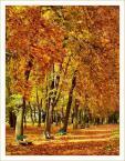 """paweljg """"Złota Polska Jesień"""" (2008-02-02 10:21:23) komentarzy: 6, ostatni: jak dla mnie trochę za mocne, nienaturalne kolory (przynajmniej te niektóre - zielone światło) ale ogólnie ciekawie"""