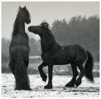 """Gosia Mąkosa """"Hein i Daan"""" (2008-02-04 09:20:25) komentarzy: 13, ostatni: ależ to są piękne stworzenia..."""