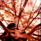 "Laluna Bel """" (2008-02-05 13:43:05) komentarzy: 17, ostatni: Fajno kolornie!"