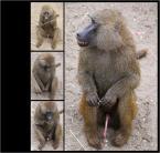 """Adam Pol """"Małpie harce.Samogwałt ..."""" (2008-02-05 19:59:18) komentarzy: 43, ostatni: onanista...."""
