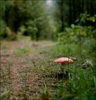 """irmi """""""" (2008-02-08 22:47:52) komentarzy: 7, ostatni: to z rodzinnym grzybozbieraniem."""