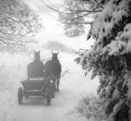 """karoten """"zimne piwo dla ceprów"""" (2008-02-10 09:51:11) komentarzy: 18, ostatni: bdb, poszły konie w siną dal :)"""