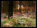 """Marcin Sośnicki """"Karkonoskie lasy - początek zimy...cz.4"""" (2008-02-10 14:47:31) komentarzy: 20, ostatni: ladnie wydobyte kolory,kadr oczyswisty.bdobre zdjecie.pozdrawiam"""