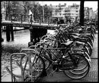 "Cigana ""Amsterdam"" (2008-02-10 17:41:38) komentarzy: 2, ostatni: ...wspomnienia wracaja..:)duuuuuuuuuzooo rowerow."