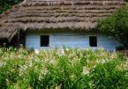 """inka """"skansenowo"""" (2008-02-13 19:08:34) komentarzy: 11, ostatni: Swojskie klimaty"""