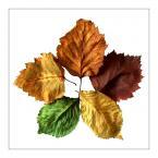 """razor """"jesienny pięciokąt"""" (2008-02-16 11:17:02) komentarzy: 31, ostatni: No bardzo ciekawe masz te zdjęcia na białym tle muszę przyznać:)"""